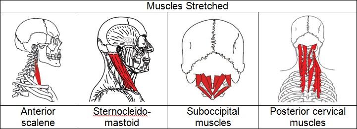cervical muscles