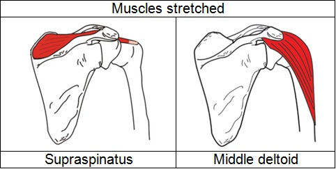 sas_b1_muscles